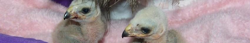 Bird Emergency | Rocky Mountain Raptor Program