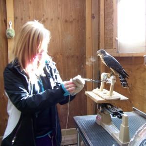 weighing merlin